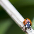 Fauna Insects 007