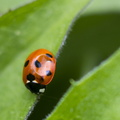 Fauna Insects 008
