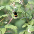 Fauna Insects 027