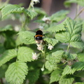 Fauna Insects 031