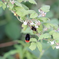 Fauna Insects 035