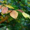 Nature Leaves 016