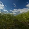 Agro Field 026