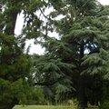 Nature Trees 004