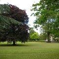 Nature Trees 008