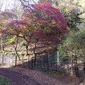 Nature Trees 012