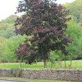 Nature Trees 014