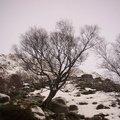 Nature Trees 001