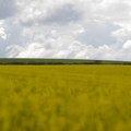 Agro Field 032