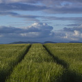 Agro Field 033
