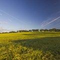 Agro Field 035