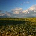 Agro Field 036