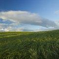 Agro Field 038