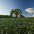 Agro Field 028