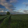 Agro Field 030