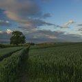 Agro Field 031