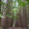 Nature Forest 023