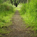Nature Forest 024
