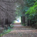 Nature Forest 028