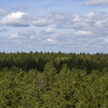 Nature Forest 013