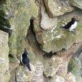 Fauna Birds 018