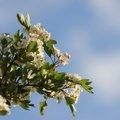 Nature Flowers 004