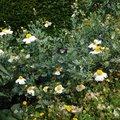 Nature Flowers 010