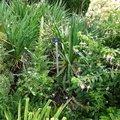Nature Flowers 012