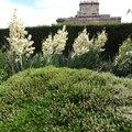 Nature Flowers 013