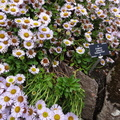 Nature Flowers 020