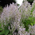 Nature Flowers 023