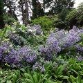 Nature Flowers 026