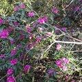 Nature Flowers 028