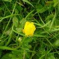 Nature Flowers 031