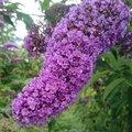 Nature Flowers 037