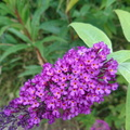 Nature Flowers 038