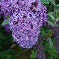 Nature Flowers 039