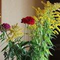Nature Flowers 044
