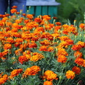 Nature Flowers 046