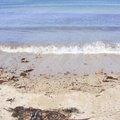 Sea Edge 042