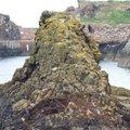 Sea Edge 113