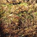 Debris Conifers 004