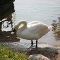 Fauna Birds 086