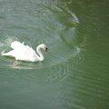Fauna Birds 087