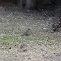 Fauna Birds 025