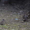 Fauna Birds 026