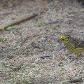 Fauna Birds 028