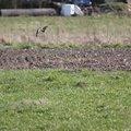 Fauna Birds 030