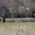 Fauna Birds 036
