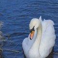 Fauna Birds 045